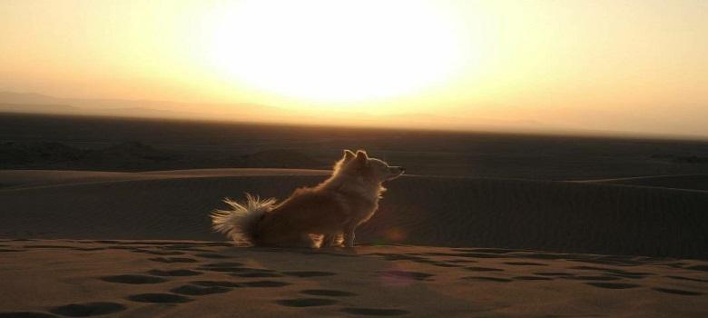 Discover Iran Deserts