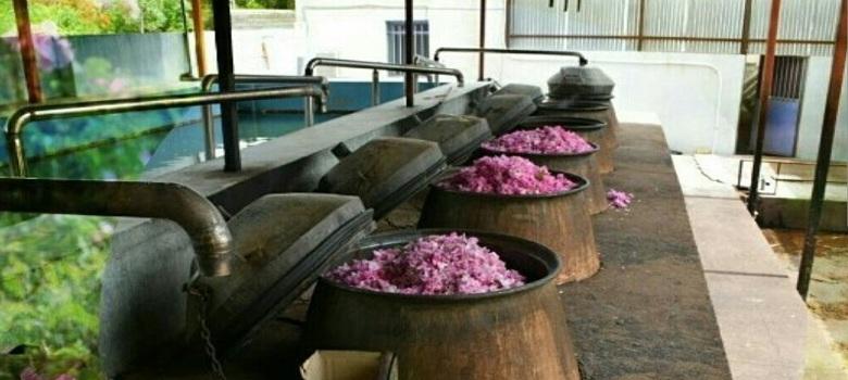 Ateliers de distillation de rose en Iran