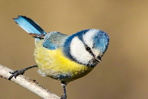 BEST Iran bird watching, Bird watching Tour of Iran