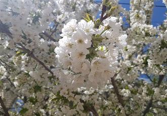 Decouverte des Fleurs Sauvages