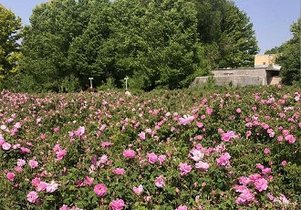 Excursion to Meimand , Golab Distillation, Rose Water tour, tour to Meimand, wildflowers in Fars
