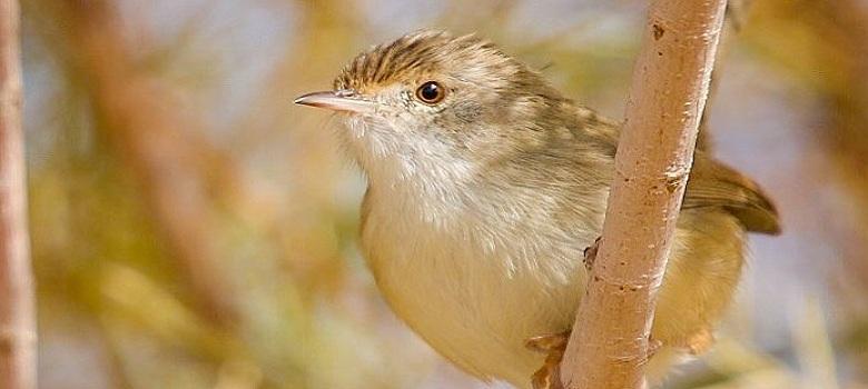 various types of Persian bird species, Iran unique bird watching tour