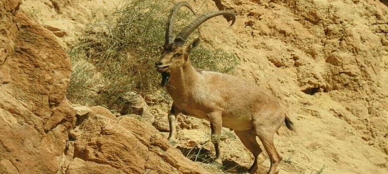 Nature & Wildlife Areas in Iran