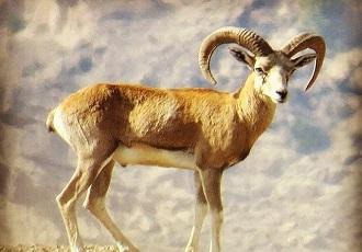 wildlife destinations in Iran