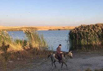 Équitation en Iran