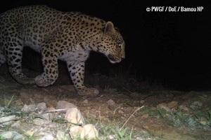 visite le Leopard en Iran
