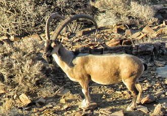 Choose your next destination for a wildlife tour in Iran via key2persia