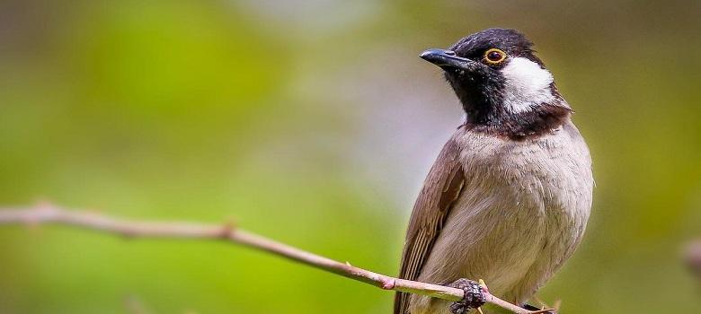 bird watching tour to Iran, various Persian bird species
