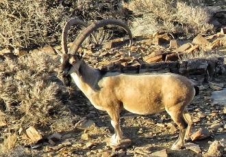 diverses espèces d'animaux sauvages en Iran