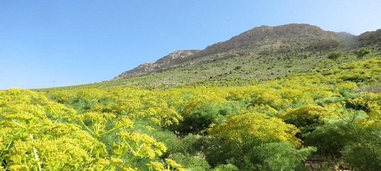 Tour to Mountains of Iran