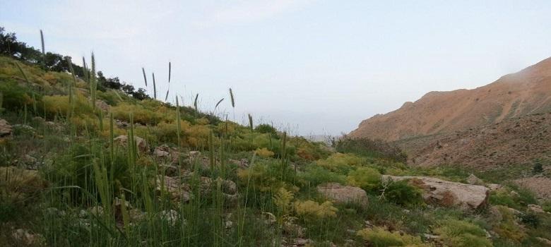 Iran Mountaineering Tours