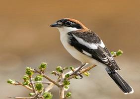 Grupos de afinidad de observación de aves, tours de observación de aves en Irán