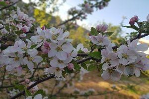 Disfruta las flores muy hermosas y especiales de irán