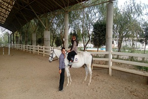 Persian horses, Persian Horse Species, Iran horse riding tours
