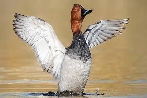 Découvrez la flore unique de l'Iran