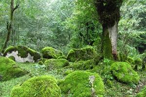 Rejoignez le parc national d'Iran et observez la vie sauvage