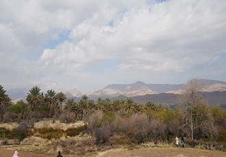 Visit Khafr , Persian Date Trees, Iranian palm tree